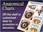 Anatomical Chart Collection