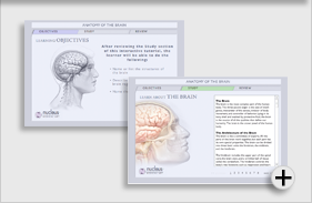 Interactive Anatomy of the Brain